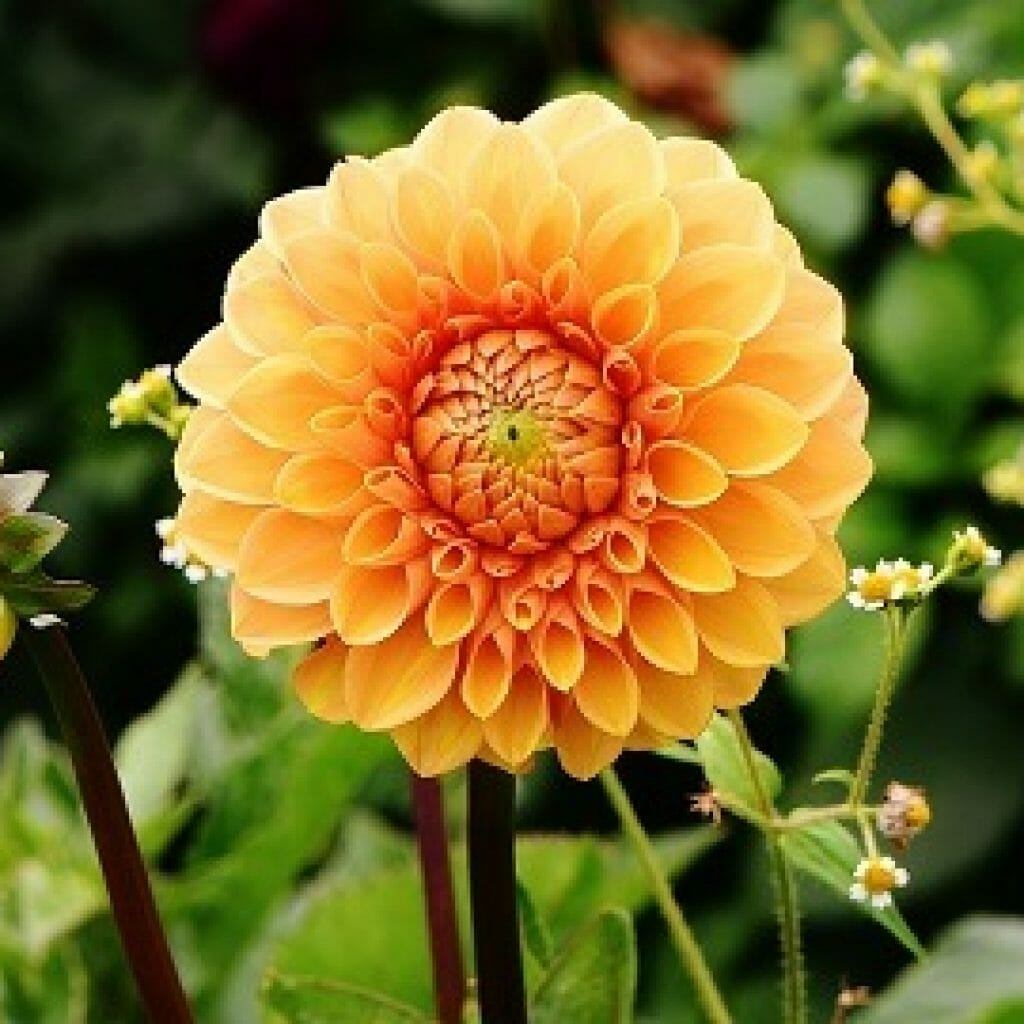 7 Plants To Include In Your Garden This Autumn Local
