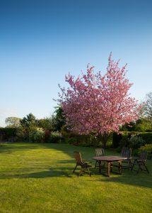 Garden Maintenance in London