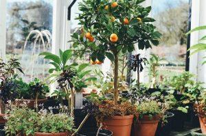gardening greenwich