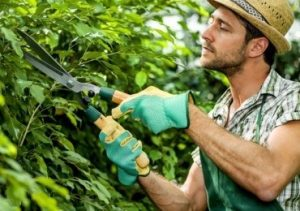 gardening services in bexley