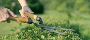 gardening services in ealing