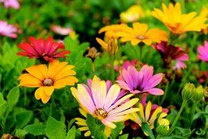 gardening services newham