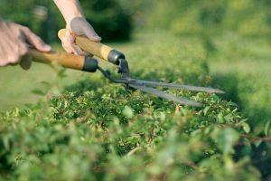 landscape gardeners in bexley