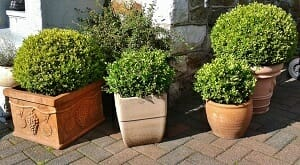 Choosing the right planters for a container garden