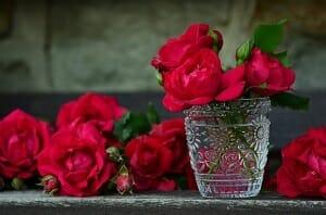 Rose Growing Tips