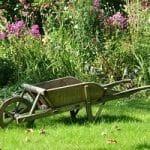 Beginner Gardener Tips