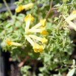 Perennials For Your Shade Garden