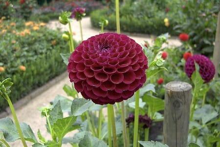 Weather Gardening Tips