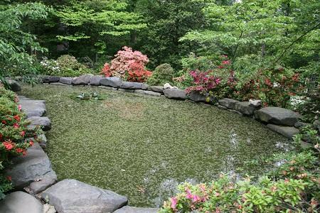 Garden Pond Care